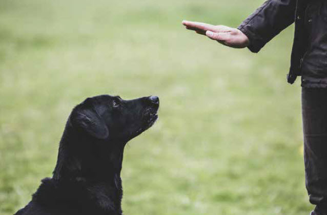 How Do You Know If Dog Training Is For You?